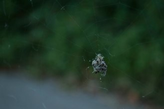 ISO - Spider Web