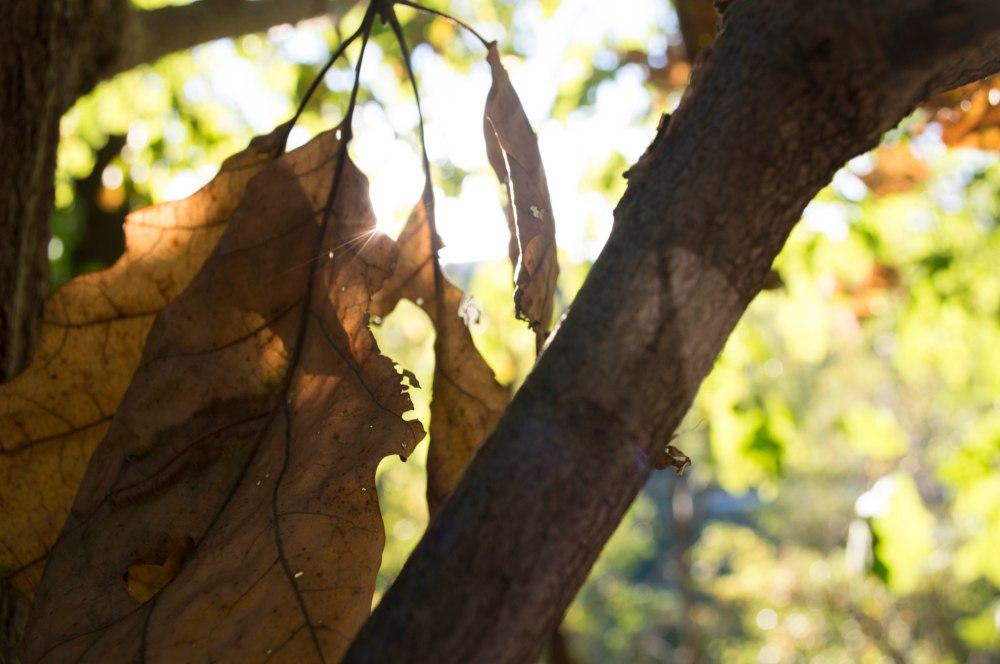 Natue Light - Leaf