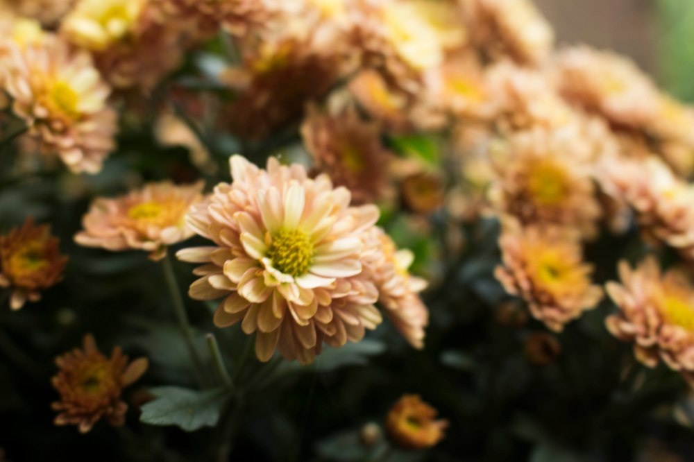 Aperture - Flowers